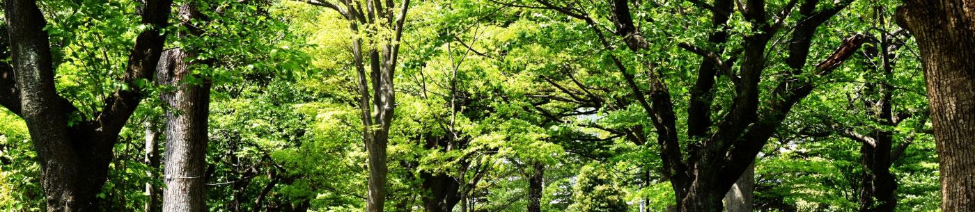 リーモ・デールの森づくり